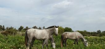 """El Corredor Verde, """"un hotel de 5 estrellas"""" para el ganado de 'Guadiamar Equina'"""
