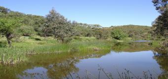 Río Guadiamar, rebosando vida