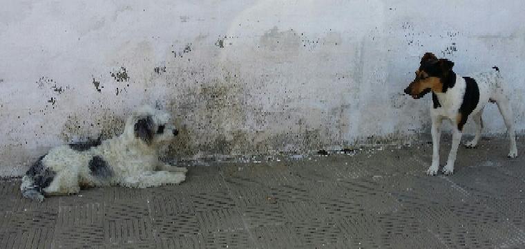 Imagen de dos animales sueltos en la vía publica de Huévar