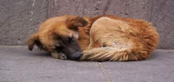 Huévar no posee en la actualidad servicio de recogida de animales