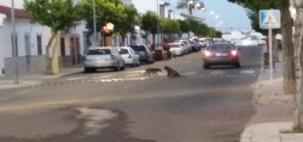 Huévar del Aljarafe ya cuenta con una nueva empresa para la recogida de animales de la vía pública