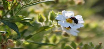 Insectos del Corredor Verde del Guadiamar
