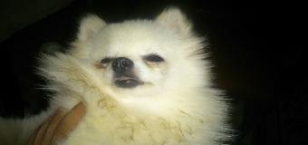 El propietario de un criadero de perros en Huévar, denuncia el robo de medio centenar de ejemplares