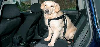 Nuevas reglas para el transporte de mascotas para los ciudadanos de la UE