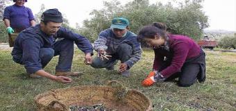 La persecución del rebusco hace peligrar el sustento de miles de familias