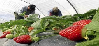 El paro baja un 4.81 % durante ABRIL ( 2015 ) en HUEVAR DEL ALJARAFE