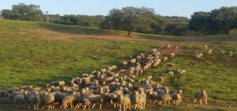 ASAJA recomienda a los ganaderos que agilicen la recogida de las vacunas contra la lengua azul para tener a todos sus animales vacunados antes del 30 de junio