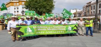 Los ganaderos se manifiestan en Sevilla para que se les cuente la superficie real  de pastos