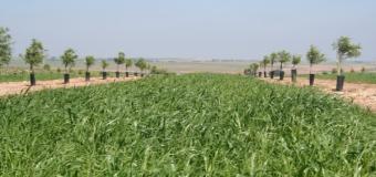 Actualizadas las sustancias activas Fitosanitarias en producción integrada