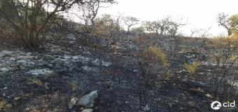 Incendio a las puertas del Corredor Verde del Guadiamar