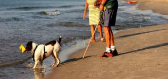 ¿Nos llevamos el perro a la playa?