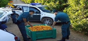 Asaja – Sevilla insta a los agricultores a denunciar ahora mas que nunca, todos los hechos delictivos que se produzcan en sus explotaciones