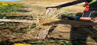 Alerta en Sevilla: Espeluznante trampa de clavos en la zona de Camas