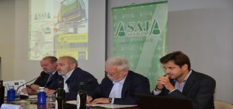 La AICA anuncia una campaña de inspecciones y sanciones en el sector de la aceituna de verdeo