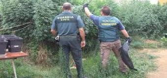 Batida de la Guardia Civil ante el aumento de cultivos de marihuana