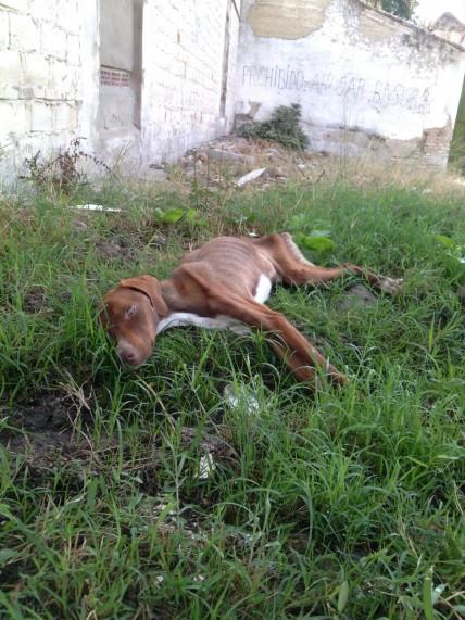 Situación en que se encontraba el animal en el momento de ser rescatado