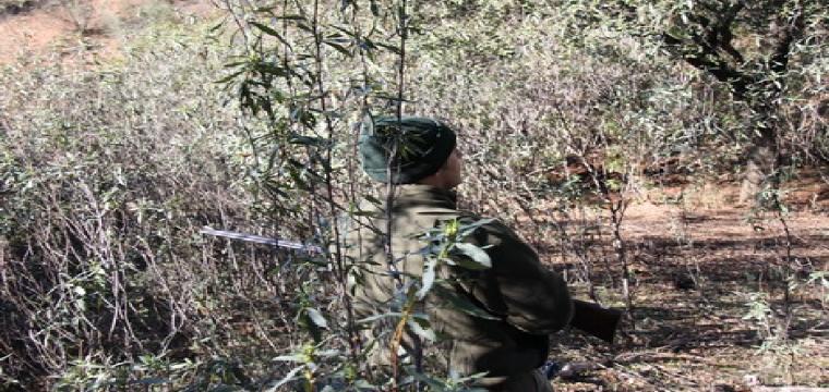 cazador licencia de caza