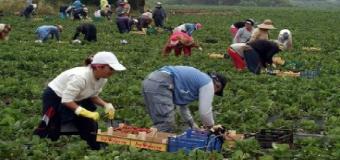El PSOE de Sevilla presentará en los ayuntamientos y la Diputación mociones de apoyo a los trabajadores del campo