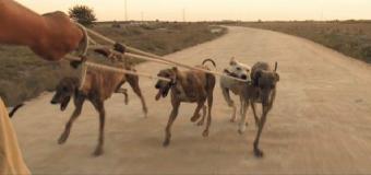 El infierno de los perros de caza comienza con la veda