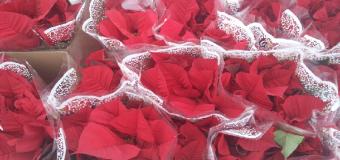 Ofrenda floral de la Hermandad del Rocío de Huévar del Aljarafe al Monumento de la Virgen