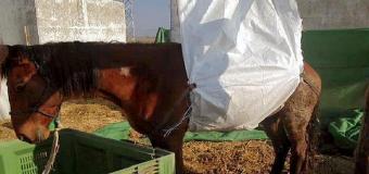 Mueren en Lebrija diez caballos en 20 días por causas desconocidas