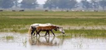 El último regalo a Gas Natural: la autorización para extracciones en Doñana