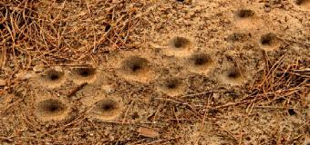 NATURALEZA – La hormiga león