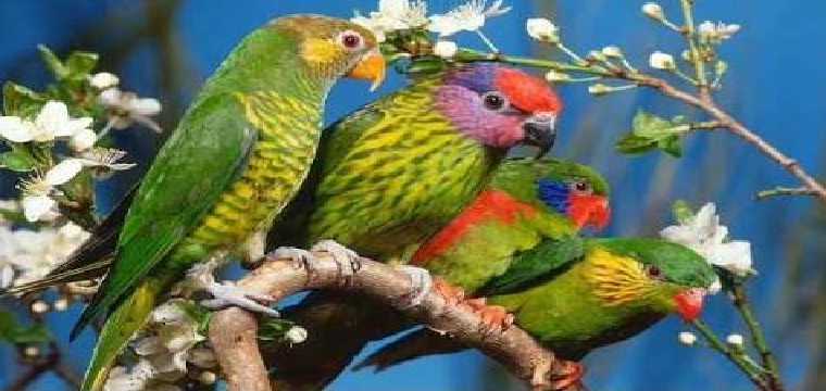 aves exoticas
