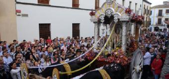 Diez hermandades caminan ya hacia El Rocío