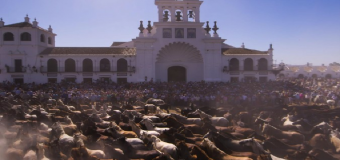 AL FIN HUBO ACUERDO – Habrá Saca de Yeguas este año