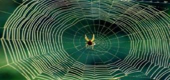 Cómo perciben las arañas a las víctimas que caen en su red