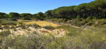 Heineken colabora con la sostenibilidad de Doñana
