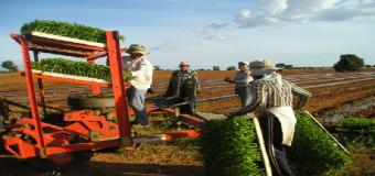 50 millones para el Programa de Fomento del Empleo Agrario en Andalucía