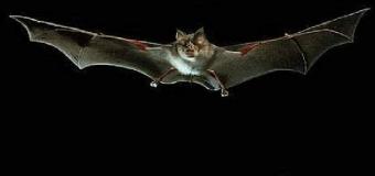 El murciélago en las aguas del guadiamar