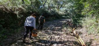 Setas en tierras Andaluzas