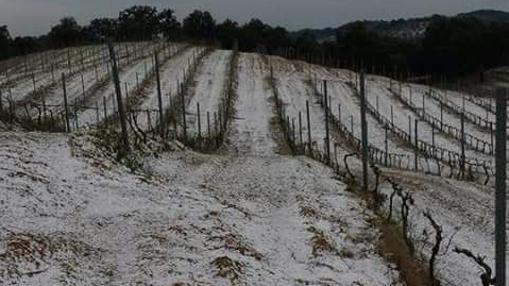 Nieve en una viña de Constantina