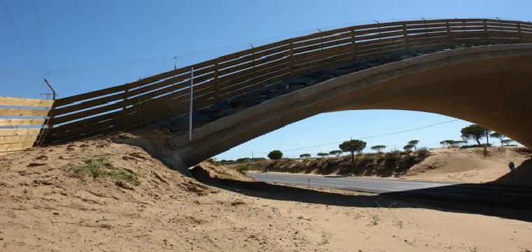 Uno de los puentes para el paso de felinos en Matalascañas - ABC