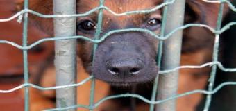 Zoomafia – gran negocio alrededor de los perros y gatos abandonados en España