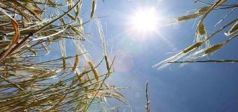La sequía preocupa a los agricultores
