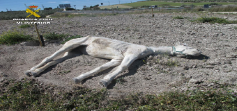 ESTEPA – Imputado un hombre por maltratar a un animal hasta la muerte