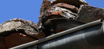 EL VENCEJO – El ave que come, bebe, copula y hasta duerme en pleno vuelo