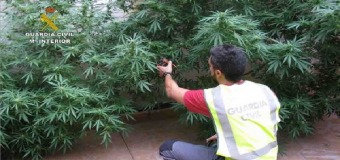 AZNALCOLLAR – Desmantelado un punto de venta al por mayor de drogas