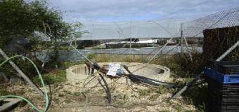 Más de 800 pozos ilegales secan Doñana con la permisividad de las autoridades