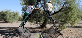 """La Diputación pide """"más fondos"""" para el Pfoea y un plan de empleo extraordinario por la caída de las cosechas"""