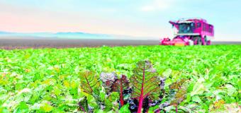 Las ayudas europeas al desarrollo rural en Sevilla ya se pueden pedir