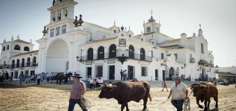 Dos boyeros conducen a sus bueyes en la aldea almonteña de El Rocío - JULIÁN PÉREZ
