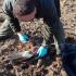 Adecuna denuncia el envenenamiento de aves rapaces en el Corredor Verde del Guadiamar ABC