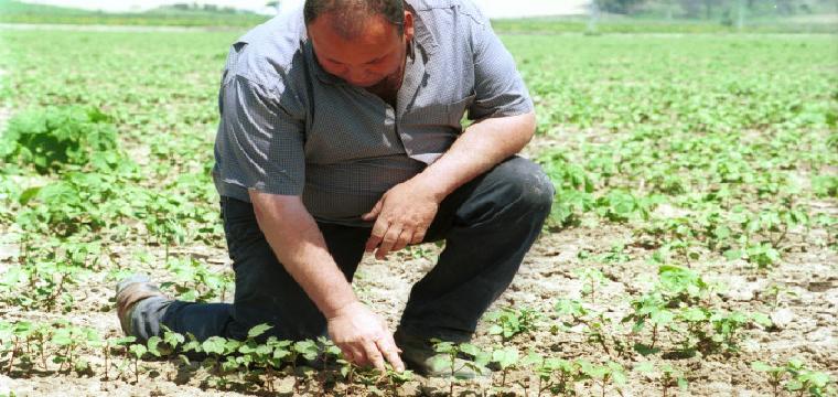Un agricultor en una finca agrícola. / Miguel Mesa