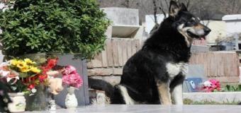Muere Capitán, el perro que cuido 10 años la tumba de su dueño