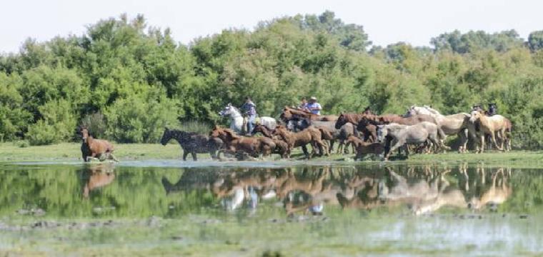 Varios ganaderos reúnen a sus yeguas para emprender el camino hacia Almonte - MIGUEL ÁNGEL JIMÉNEZ GARCÍA